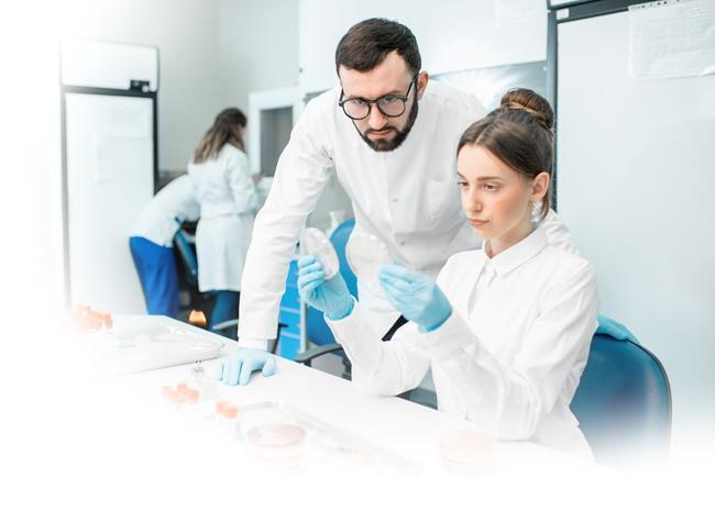 Zwei Assistenzärzte schauen sich mikrobiologische Ausstriche im Medizinlabor gemeinsam an.